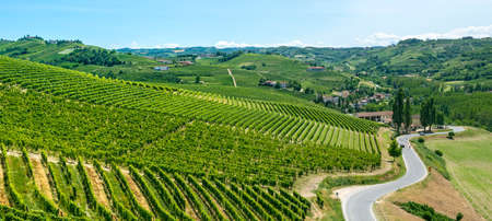 Langhe (Asti, Cuneo, Piedmont, Italy) - Landscape at summer with vineyards Stock Photo - 22407485