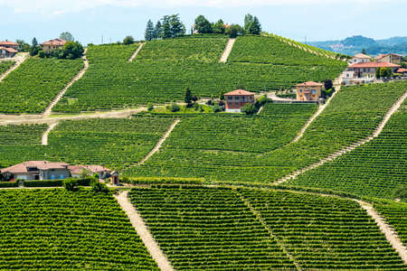 Langhe (Asti, Cuneo, Piedmont, Italy) - Landscape at summer with vineyards photo