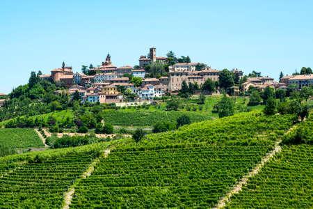 ランゲ (アスティ、クーネオ、イタリア、ピエモンテ州) - 夏のブドウ畑の風景 写真素材