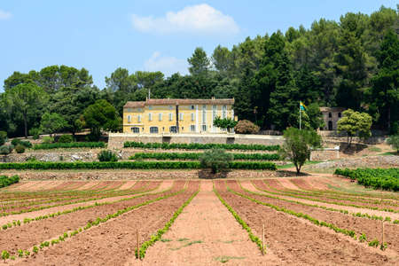 Farm with vineyard in Var (Provence-Alpes-Cote dAzur, France) at summer
