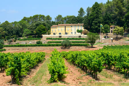Farm with vineyard in Var (Provence-Alpes-Cote dAzur, France) at summer photo