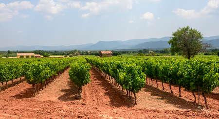 Landscape with vineyard in Var (Provence-Alpes-Cote dAzur, France) at summer 版權商用圖片
