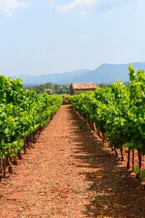 var: Landscape with vineyard in Var (Provence-Alpes-Cote dAzur, France) at summer Stock Photo