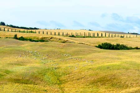 characteristic: Crete senesi, characteristic landscape in Val dOrcia Stock Photo