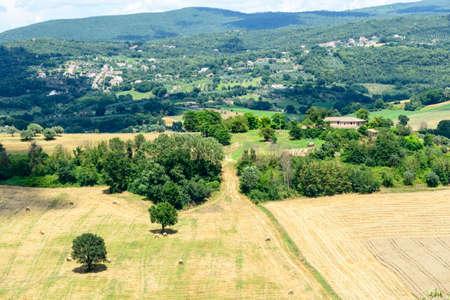 terni day: Summer landscape whit olive trees and vineyards near Narni (Terni, Umbria, Italy)