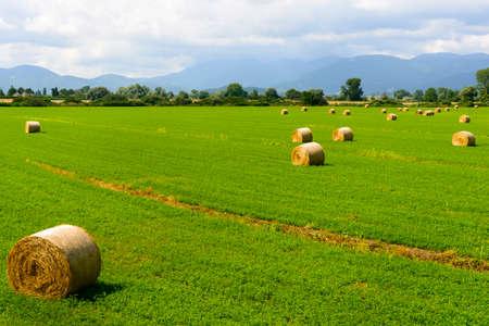 rieti: Country landscape near Rieti (Lazio, Italy) at summer: Green field with bales Stock Photo