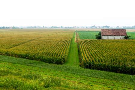 Landscape along the Po river near Ferrara (Emilia-Romagna, Italy) at summer