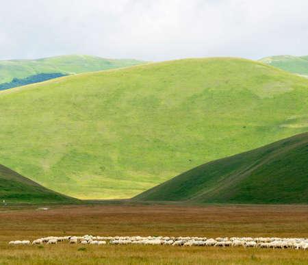 sibillini: Piano Grande di Castelluccio (Perugia, Umbria, Italy), famous plateau in the natural park of Monti Sibillini. Sheeps at pasture. Stock Photo