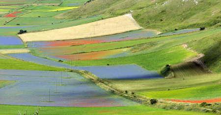 plateau of flowers: Piano Grande di Castelluccio (Perugia, Umbria, Italy), famous plateau in the natural park of Monti Sibillini Stock Photo