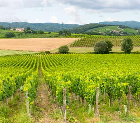 montalcino: Montalcino (Siena, Tuscany, Italy): country landscape at summer Stock Photo