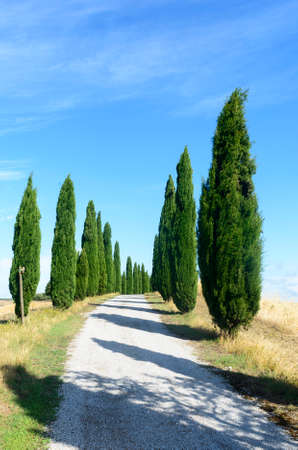 характеристика: Crete senesi, characteristic landscape in Val dOrcia (Siena, Tuscany, Italy), at summer. Road and cypresses Фото со стока