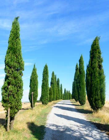 characteristic: Crete senesi, characteristic landscape in Val dOrcia (Siena, Tuscany, Italy), at summer. Road and cypresses Stock Photo