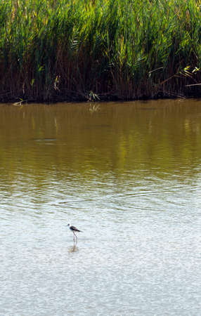 comacchio: Valli di Comacchio (Ravenna - Ferrara, Emilia-Romagna, Italy). Ponds at summer