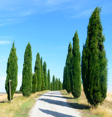 asciano: Crete senesi, characteristic landscape in Val dOrcia (Siena, Tuscany, Italy), at summer. Road and cypresses Stock Photo