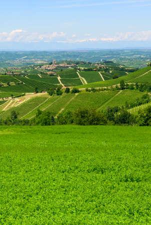 dia soleado: Paisaje de verano en Langhe (Piamonte, Italia), con viñedos Foto de archivo