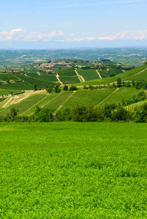 sunny day: Summer landscape in Langhe (Piedmont, Italy), with vineyards