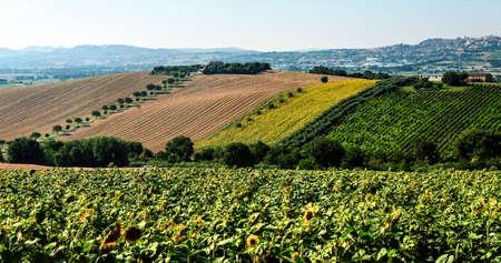 recanati: Country landscape near Recanati (Macerata, Marches, Italy) at summer