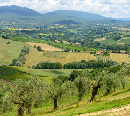 terni day: Summer landscape whit olive trees and vineyards near Narni (Terni, Umbria, Italy)