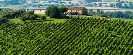 recanati: Country landscape near Recanati (Macerata, Marches, Italy) at summer with vineyard Stock Photo