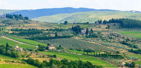 Landscape in Chianti (Florence, Tuscany, Italy) with vineyards and olive trees at summer Stock Photo