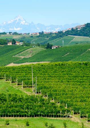 piedmont: Summer landscape in Langhe (Piedmont, Italy), with vineyards