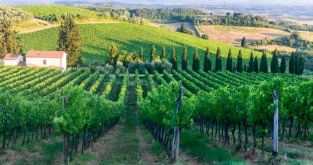 夏にブドウ畑とキャンティ (イタリア、トスカーナ州、フィレンツェ) の風景します。