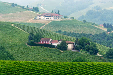 italian landscape: Landscape in Langhe (Cuneo, Piedmont, Italy) at spring. Vineyards