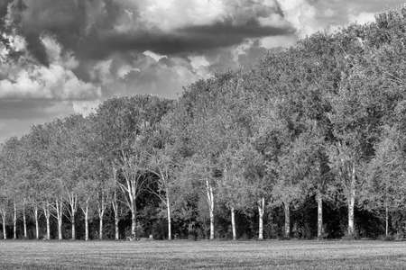 nord: Milan (Lombardy, Italy): the park known as Parco Nord, at late summer. Black and white