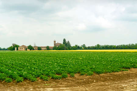 piedmont: Field of potatoes at spring near Alesssandria (Piedmont, Italy). Rural landscape Stock Photo