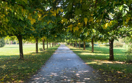 nord: Milan (Lombardy, Italy): path in the park known as Parco Nord, at late summer
