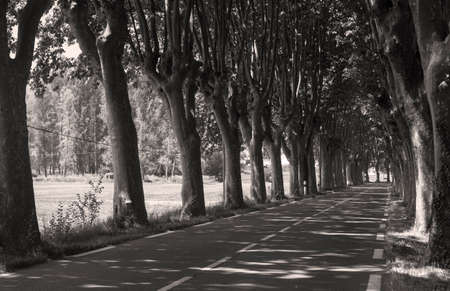 apt: Typical road in Provence between Apt and Manosque (Provence-Alpes-Cote dAzur, France) with rows of trees, at june. Black and white. Stock Photo