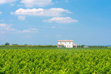 camargue: White house in the countryside of Camargue (Provence, France) at spring (june) Editorial