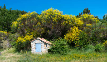 brooms: Hut and brooms in Provence (France) at spring (june)