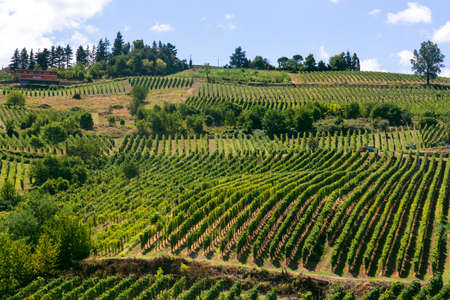 Summer landscape in Oltrepo Pavese (Pavia, Lombardy, Italy) at summer (August) with vineyards 스톡 콘텐츠