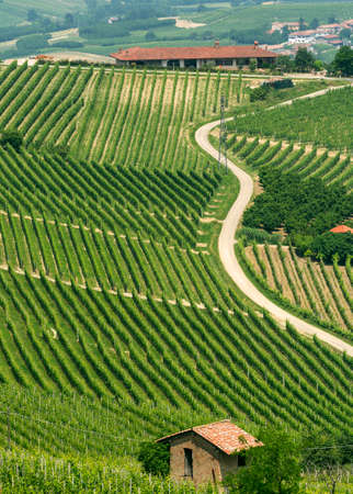 piedmont: Landscape in Langhe (Cuneo, Piedmont, Italy) at spring. Vineyards