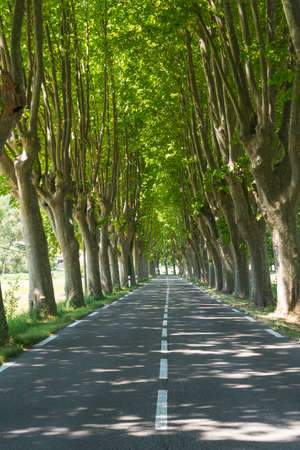 apt: Typical road in Provence between Apt and Manosque (Provence-Alpes-Cote dAzur, France) with rows of trees, at june Stock Photo
