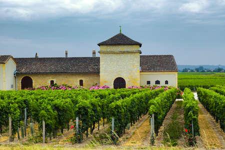 viñedo: País paisaje con viñedos en Gironde (Aquitania, Francia), cerca de Burdeos, en el verano Foto de archivo