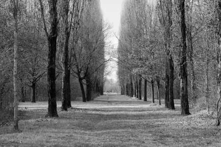 nord: Milan (Lombardy, Italy): the big park known as Parco Nord at winter (february), with rows of trees. Black and white