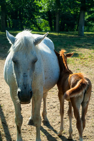 catalunya: Two horses, mother and son, in Catalunya (Spain) Stock Photo