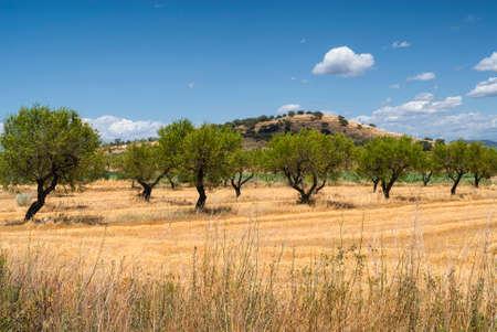 aragon: Aragon (Spain): landscape near Huesca at summer. Stock Photo