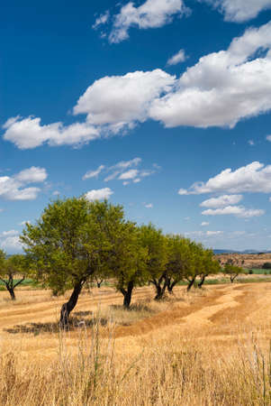 huesca: Aragon (Spain): landscape near Huesca at summer. Stock Photo
