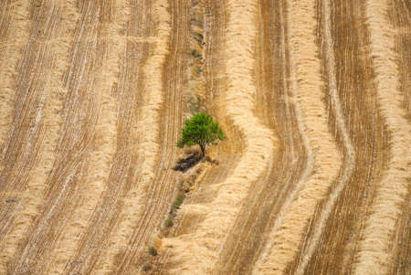 catalunya: Country landscape from Cervera (Catalunya, Spain) at summer. Lonely tree