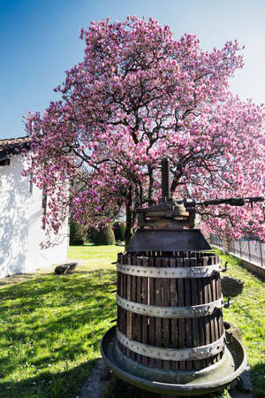 monza: Flowered magnolia and old press in Biassono (Monza, Brianza, Lombardy, Italy) at early spring