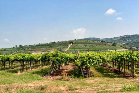 veneto: Landscape in Lessinia (Verona, Veneto, Italy): sunny summer day