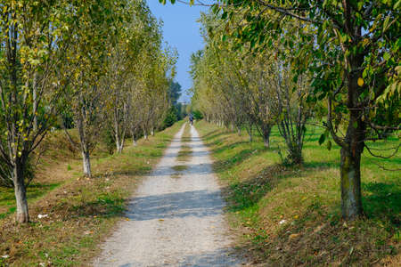 monza: Park of Grugnotorto (Lombardy, Italy), between Milan and Brianza, in autumn. A path for bicycle and pedestrian
