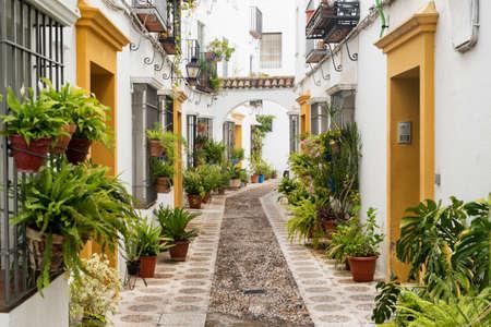 植物や花がフデリアのコルドバ (スペイン ・ アンダルシア州): 古い典型的な通り