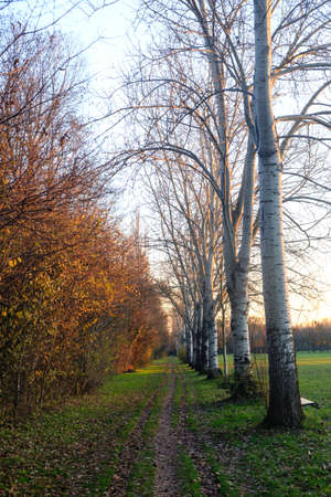 Milan (Lombardy, Italy): the park known as Parco Nord at fall Stock Photo