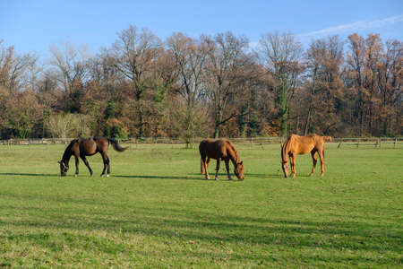 monza: Monza (Brianza, Lombardy, Italy): horses at pasture into the Park in november