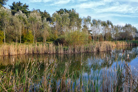 monza: Grugnotorto park (Brianza, Lombardy, Italy): the little lake at fall Stock Photo