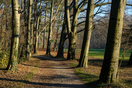 monza: Monza (Brianza, Lombardy, Italy): the park at december (late fall)